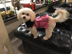 DinkyDogClub Pink Wool Dog Coat With Faux Fur Trim Review