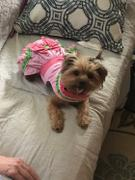 DinkyDogClub Watermelon Dog Dress Review