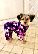 DinkyDogClub Klippo Midnight Garden Fleece Turtleneck Dog Pajamas Review