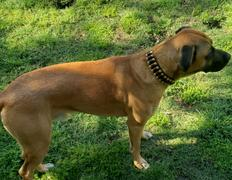 Cold Dead Hands  Six Shooter Brand Ammo Dog Collar Review
