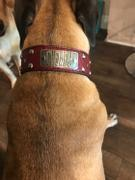 Pit Bull Gear TW12 - 2 Name Plate Tapered Dog Collar w/Studs Review