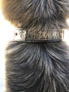Pit Bull Gear V30 - 1 1/2 Name Plate Dragons & Gems Leather Collar Review