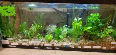 Wetplants Turtle Safe Aquatic Plant Packs Review