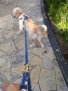Boss & Olly Customise a Tri-coloured Leash Review