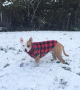 Tooth & Honey Buffalo Plaid Fleece Dog Vest Review
