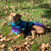 Tooth & Honey Northern Lights Fleece Dog Vest Review