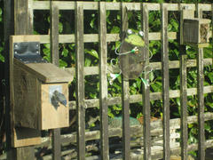 Green Feathers Wireless Bird Box Camera Review