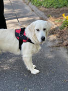 Joyride Harness Winter Trees Dog Harness Review