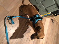 Joyride Harness 2 in 1: Dog Leash/Seatbelt Combo Review