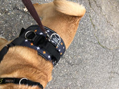 Joyride Harness Stars and Stripes Dog Harness Review