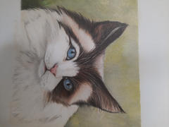 Ann Kullberg Sweet Ragdoll: In-Depth Colored Pencil Tutorial Review