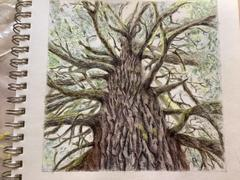 Ann Kullberg Towering Tree: In-Depth Colored Pencil Tutorial Review