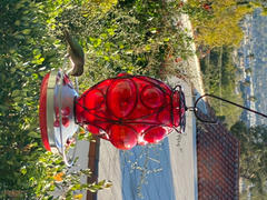Grateful Gnome Moroccan Lantern Hummingbird Feeder - Hand Blown Glass - 28 Fluid Ounces Review