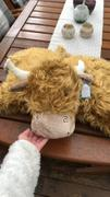 Contempo  Jellycat Truffles Highland Cow Review