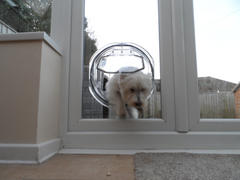 Smart Pet Devices. Pet Tek Clear Glass Fitting Dog Door - Transparent for Medium Size Dogs Review
