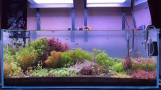 The 2Hr Aquarist 2Hr Aquarist APT Complete Review