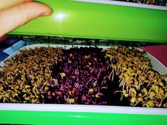 Wholesale Microgreens 1 kg Mix of Seeds Review