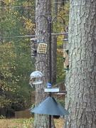 More Birds Droll Yankees® Cutest Chickadee Bird Feeder with Adjustable Dome, .5 lb. capacity Review
