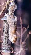 More Birds Squirrel-X™ X4 Squirrel-Proof Bird Feeder with Push-Button Top, 1.5 lb. capacity Review