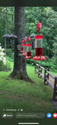 More Birds More Birds® Bird Health+™ Diamond Hummingbird Feeder with Built-in Ant Moat, 30 oz. capacity Review