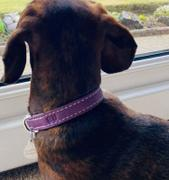 RYAN LONDON Dog Collar - Rimy Pink Review