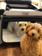 DogGoods Do Good ® The Foldable Travel Dog Crate By DogGoods ® Review