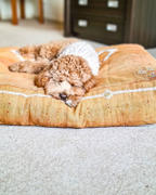 Sebastian Says Cactus Silk Dog Bed, Rust Medium Review