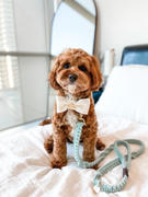 Sebastian Says Macramé Originals Dog Lead - Blue Review