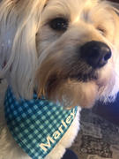 Mod Peach Personalized Dog Bandana - Blue Check Review