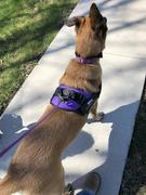 Doggykingdom Custom velcro label / patches for Dog Harness by Doggykingdom® Review