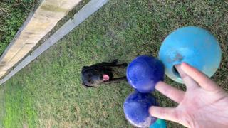 Rocco & Roxie Supply Co. Nearly Indestructible Dog Toy Ball Review