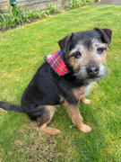 Dogrobes Collar Bandana Tartan Review