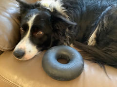 Frank and Jellys GoughNuts Tug Toy Review