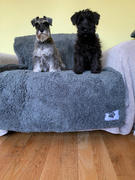 Frank and Jellys Pet Rebellion Comfy Cover Sofa Cover for Dogs Review