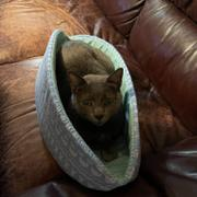 The Cat Ball Cat Canoe - Neutral Wood Bamboo Review