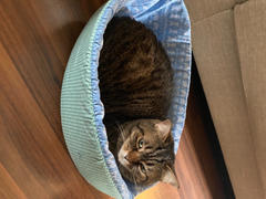 The Cat Ball Cat Canoe - Blue Sweater Knit Review