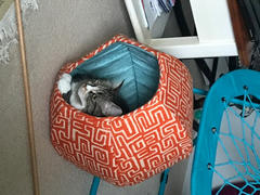 The Cat Ball Cat Ball Bed - Black Cats and Harlequin Review