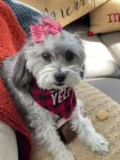 Pawlicious & Company Stripe Dolly Dog Hair Bow in Red Review