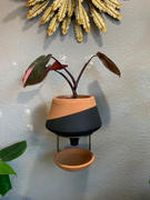 Holistic Habitat  The Holistic Habitat Wall Mount Funnel Planter-Black Review