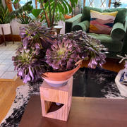 Holistic Habitat  Terracotta Colorblock Cone Pot on Wooden Stand Review