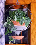 Holistic Habitat  Triple Stripe Hanging Funnel Planter Review