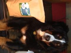 Luckydogs Bakery Lucky's Peanut Butter Cookies<br>2lb Bag Review