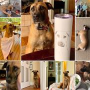 Inkopious Luna the Black Mouth Cur - 20oz Skinny Tumbler Review