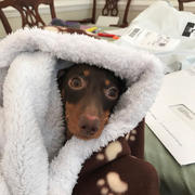 WeenieWarmers Brown Paw Fleece with Faux Sheepskin Lining Weenie Warmer Review