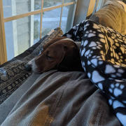 WeenieWarmers Black Paw Print Fleece/Sherpa Weenie Warmer Review