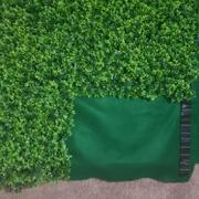 tableclothsfactory.com 11 Sq ft.  | 4 Panels Artificial Lime Green Boxwood Hedge Genlisea Faux Foliage Green Garden Wall Mat Review
