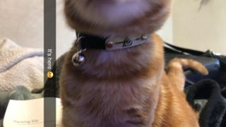 Pawsonify Ninja Collar Review