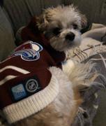 Togpetwear Colorado AVALANCHES NHL Dog Sweater Review