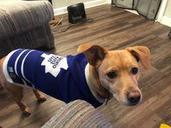 Togpetwear Toronto MAPLE LEAFS NHL Dog Sweater Review