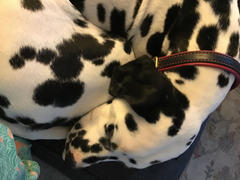 Sexy Beast Dog Collars The Onesie Limited Slip Martingale Review